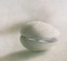 Shell by Jill Ferry