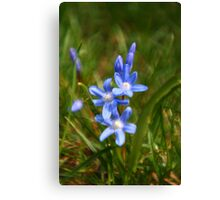 BlueFlower - My First LOMOGRAPHY shot. Canvas Print