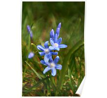 BlueFlower - My First LOMOGRAPHY shot. Poster