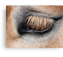 Muffled look Canvas Print