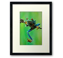 Caught climbing Framed Print