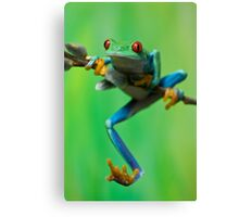 Caught climbing Canvas Print