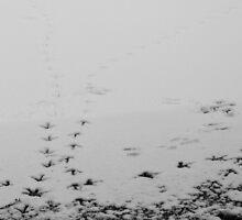 Swanprints by Robert Thornton