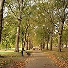 Autumn St. James' Park London by lilivanili