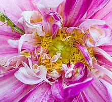 The Pink and Green by Mukesh Srivastava