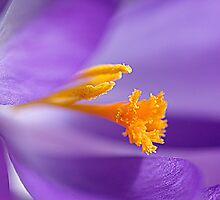 Yellow and purple. by Hetty Mellink