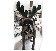 I'm Not A Reindeer!  -Boxer Dogs Series- Poster