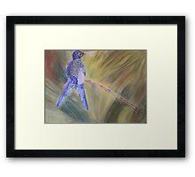 Hummingbird - pastel on paper Framed Print