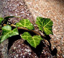 Concrete Ivy by Brittany Schneider