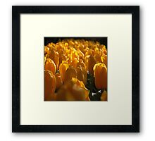 The land of tulips Framed Print