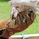 Hawk & Handler by CreativeEm