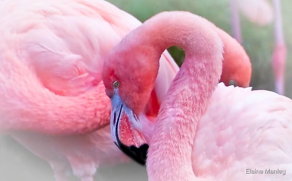 Bubble Gum Pink by Elaine  Manley