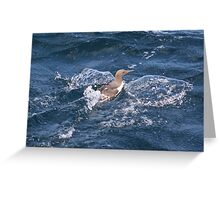 Turbo charged Guillemot! Greeting Card