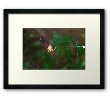 spider weaving web Framed Print