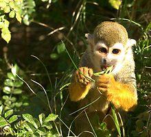 Spider Monkey on Monkey Island by Diana Graves Photography