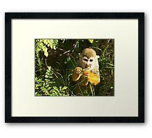 Spider Monkey on Monkey Island Framed Print