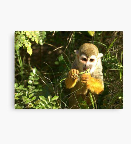 Spider Monkey on Monkey Island Canvas Print