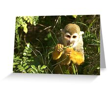Spider Monkey on Monkey Island Greeting Card