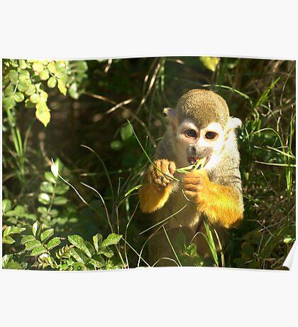 Spider Monkey on Monkey Island Poster
