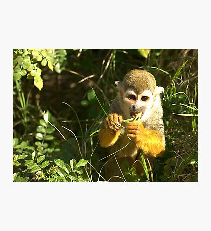 Spider Monkey on Monkey Island Photographic Print