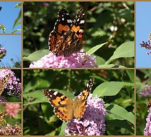 My Butterfly Bush ! by Trish Meyer