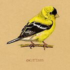 Gold Finch Bird by Revelle Taillon