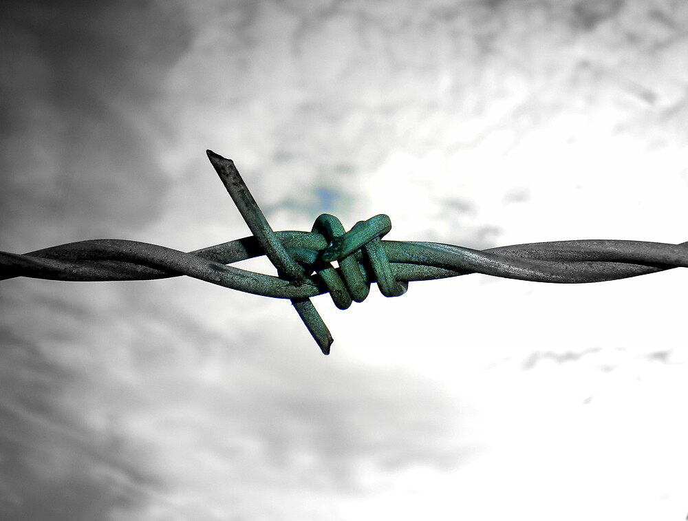 Barbed by Josephine Pugh