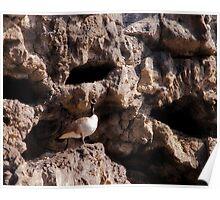 Anasazi Geese Poster