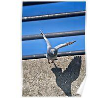 Pigeon in Flight Poster