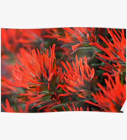 Indian Paintbrush 2 - Watercolor filter Poster