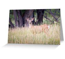 Mule Deer in Long Grass Greeting Card