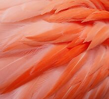 Flamingo Feathers by Erin Johnson
