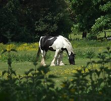 Solitary Horse Grazing Peacefully by Malky-C