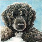 Portuguese Water Dog  by Charlotte Yealey