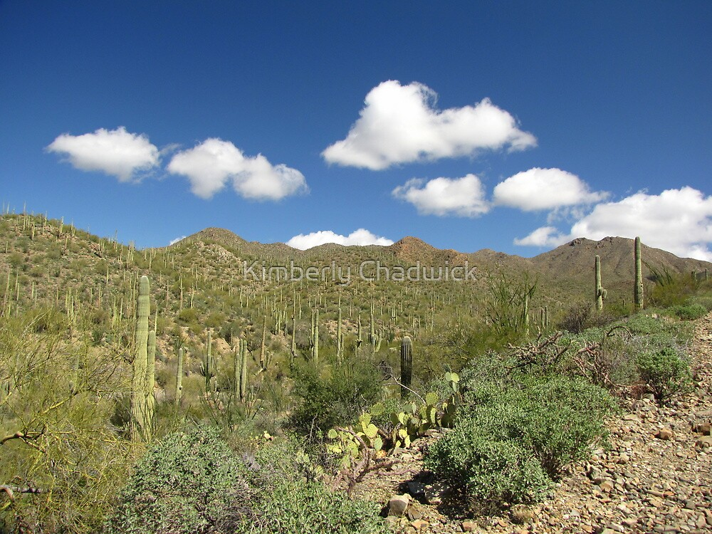 Sonoran Scenery Series ~ 6 ~ by Kimberly Chadwick