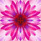Lotus Mirror Abstract by Hugh Fathers