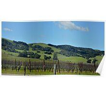 Napa Valley Cali 2 Poster