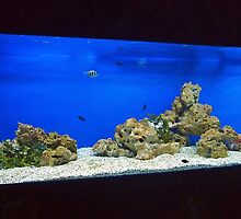 Large and long aquarium with sea water blue by vladromensky