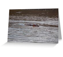 Peeking through the water, South Africa Greeting Card