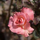 Spring has sprung by Bonnie Pelton