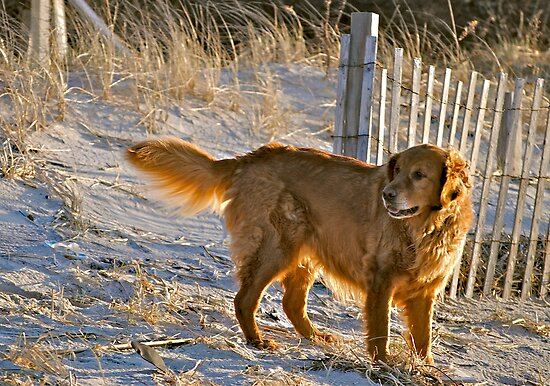 Golden... by Karen  Helgesen