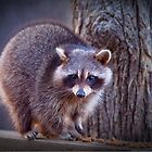 """""""Evening Visitor"""" by Melinda Stewart Page"""