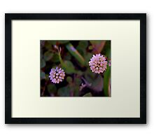 Mace Flower 2 Framed Print