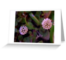 Mace Flower 2 Greeting Card