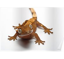 gecko Poster
