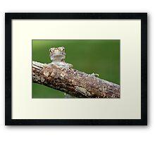 dwarf gecko Framed Print