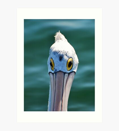 Look me in the eye Pelican Art Print