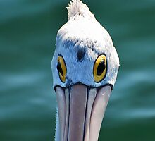 Look me in the eye Pelican by bazcelt