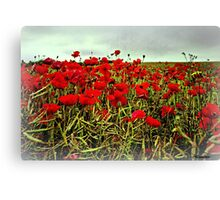 Red Glow of Poppy Fields Canvas Print