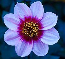 A Floral Arrangement by Cathy  Walker